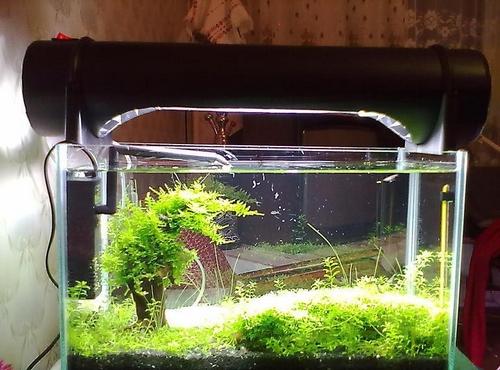 Особенности ламп для аквариума