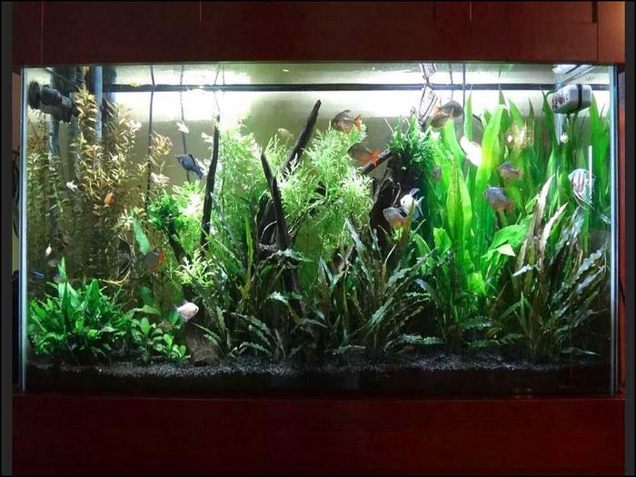 Как завести свой первый аквариум