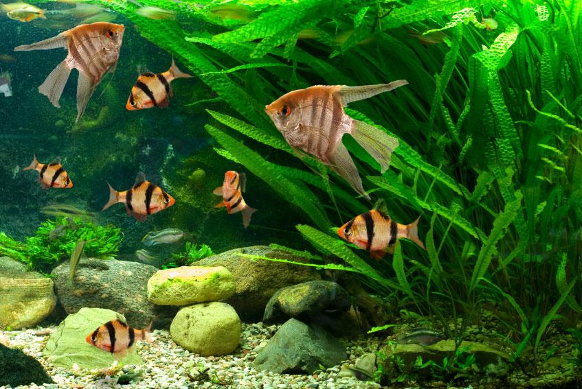 О покупке аквариумных товаров через Интернет