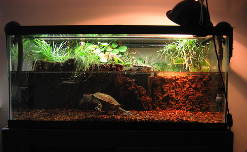 декоративное оформление аквариума для красноухой черепахи