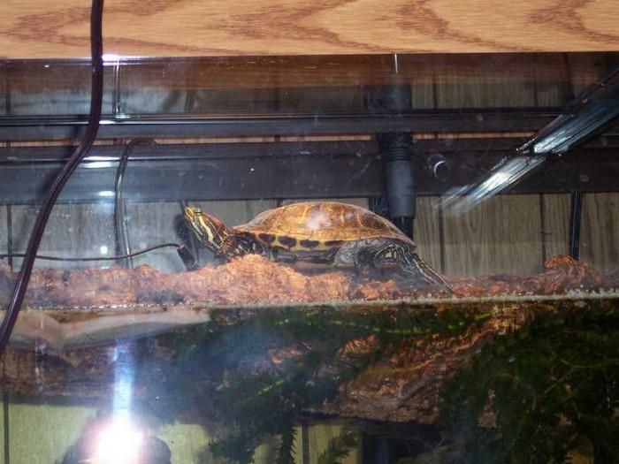 островок для красноухой черепахи