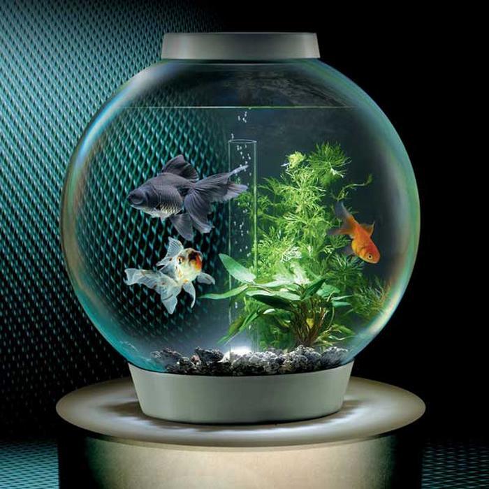 Круглый аквариум оформление и содержание