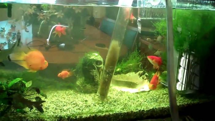 Как правильно чистить домашний аквариум